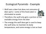 ecological pyramids example