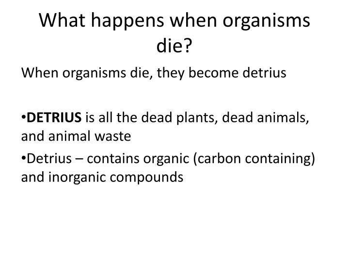 What happens when organisms die?
