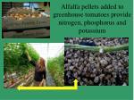 alfalfa pellets added to greenhouse tomatoes provide nitrogen phosphorus and potassium