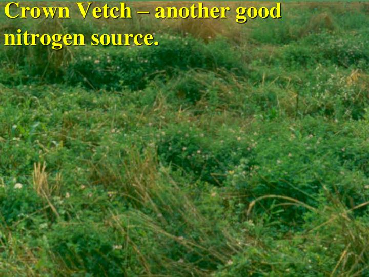 Crown Vetch – another good nitrogen source.