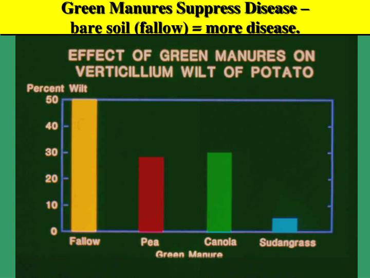 Green Manures Suppress Disease –