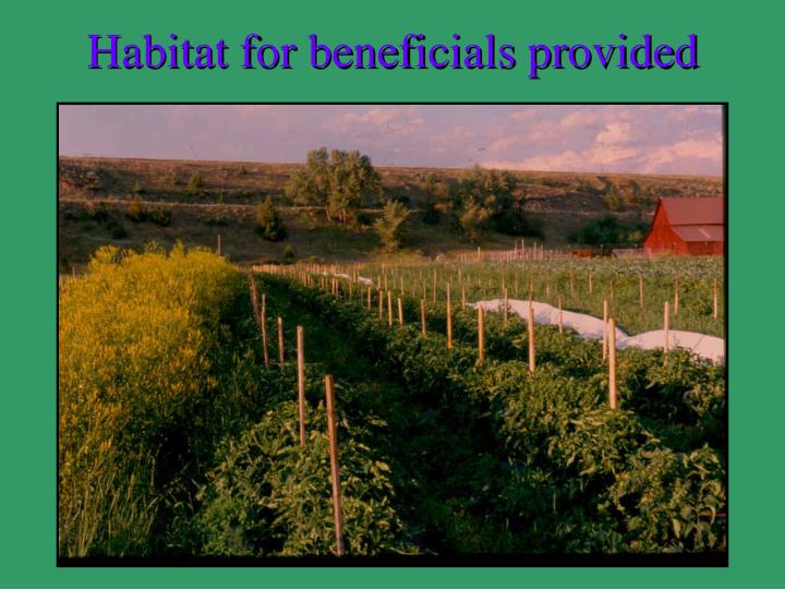 Habitat for beneficials provided