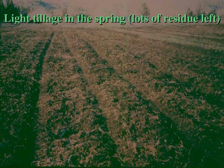 Light tillage in the spring (lots of residue left)