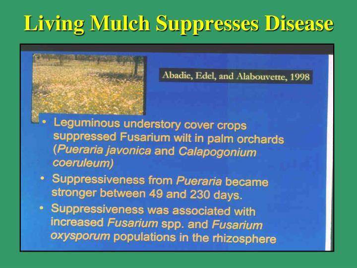 Living Mulch Suppresses Disease