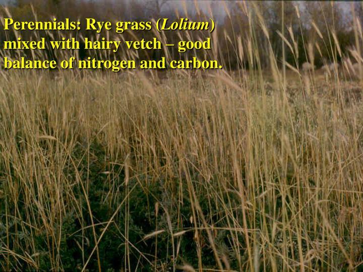 Perennials: Rye grass (
