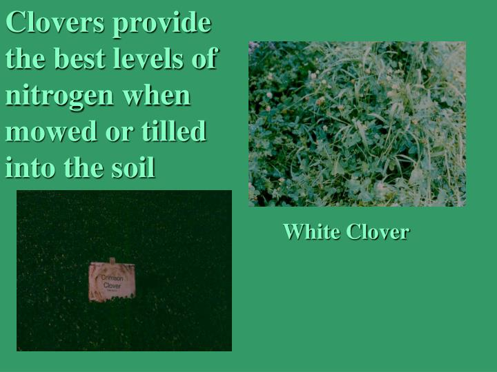 Clovers provide the best levels of  nitrogen when mowed or tilled into the soil