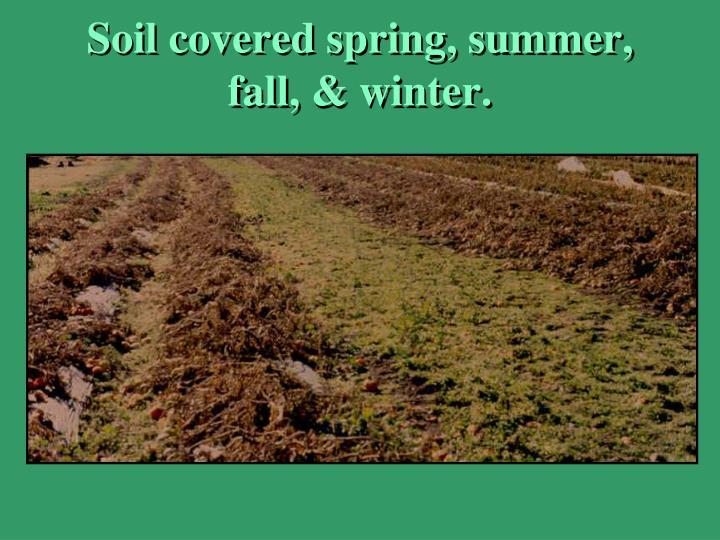 Soil covered spring, summer, fall, & winter.