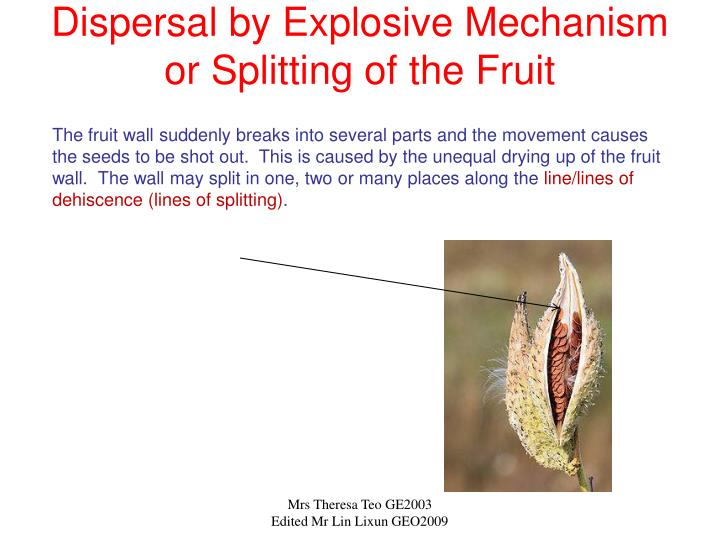 Dispersal by Explosive Mechanism or Splitting of the Fruit
