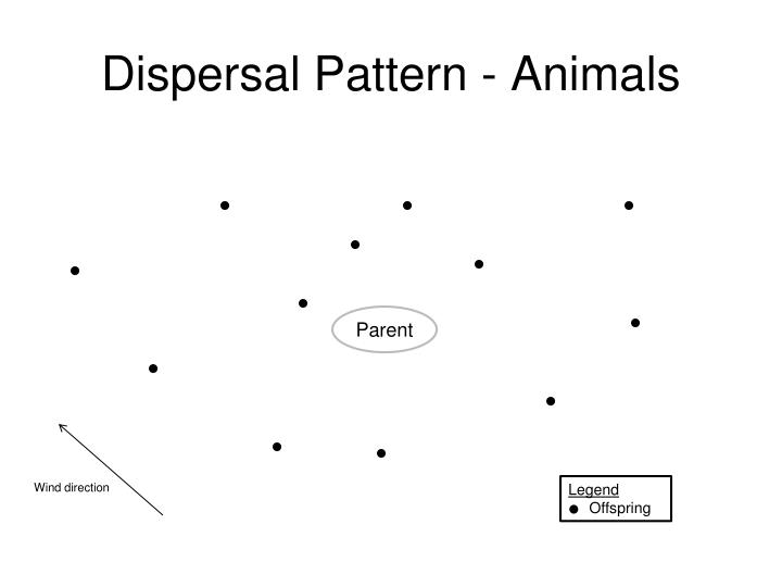 Dispersal Pattern - Animals