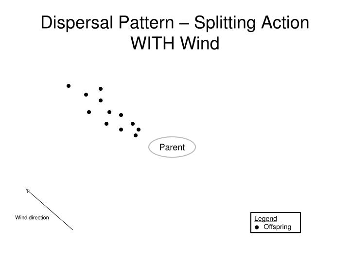 Dispersal Pattern – Splitting Action WITH Wind