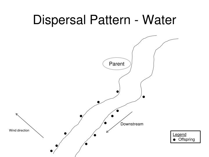Dispersal Pattern - Water