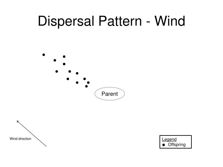 Dispersal Pattern - Wind