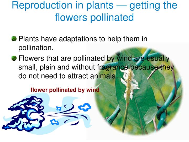 Reproduction in plants getting the flowers pollinated1