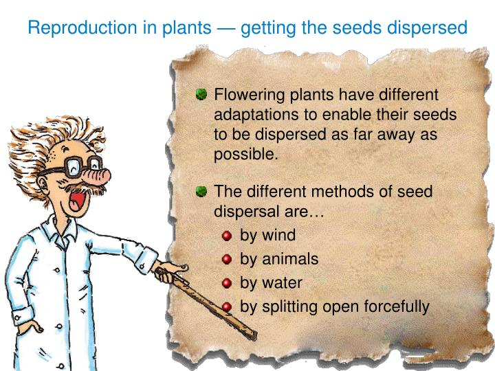 Reproduction in plants — getting the seeds dispersed