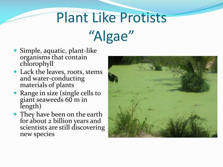 Plant Like Protists