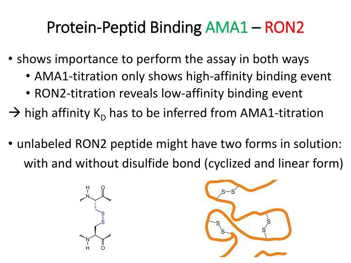 Protein-Peptid Binding
