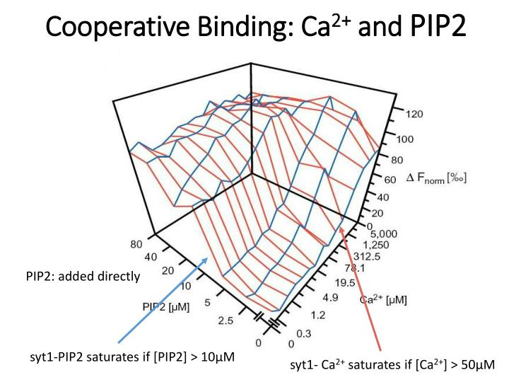 Cooperative Binding: Ca