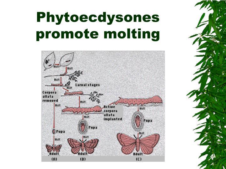Phytoecdysones promote molting