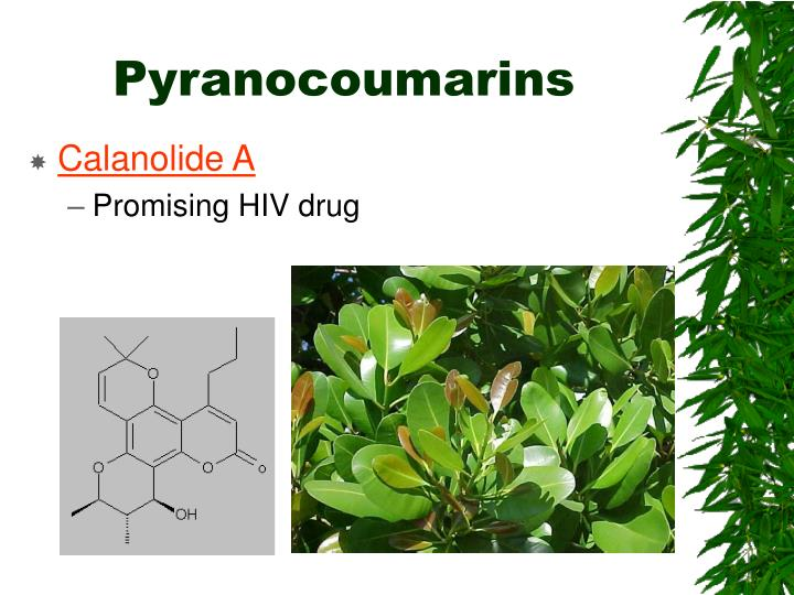 Pyranocoumarins