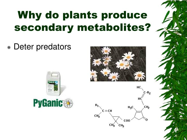 Why do plants produce secondary metabolites?