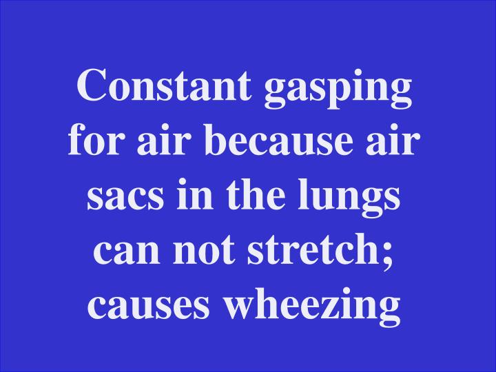 Constant gasping for air because air sacs in the lungs can not stretch; causes wheezing