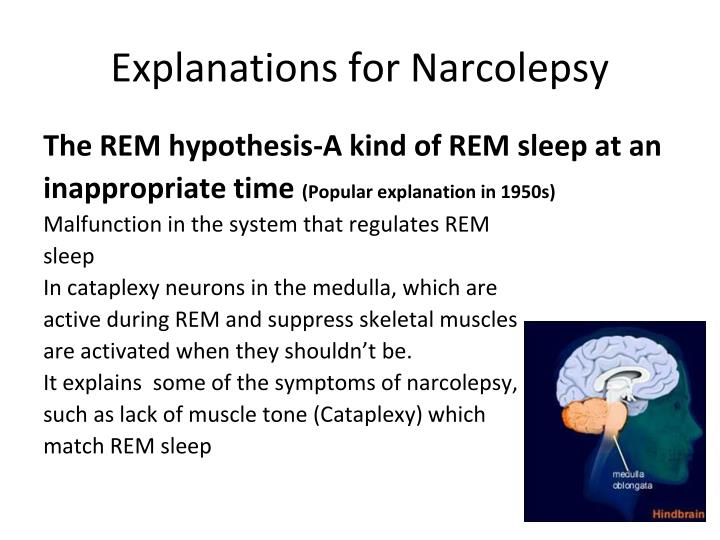 Explanations for Narcolepsy