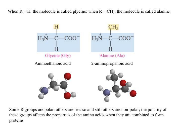 When R = H, the molecule is called glycine; when R = CH