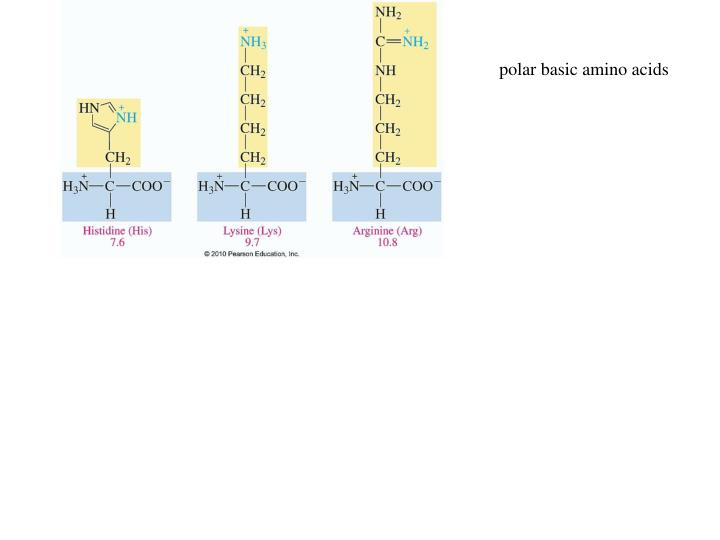 polar basic amino acids