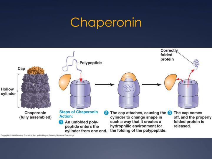 Chaperonin