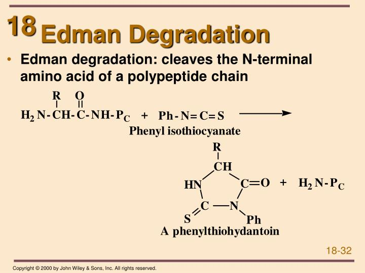 Edman Degradation