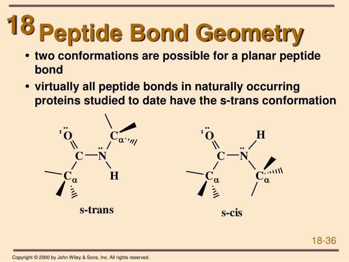 Peptide Bond Geometry