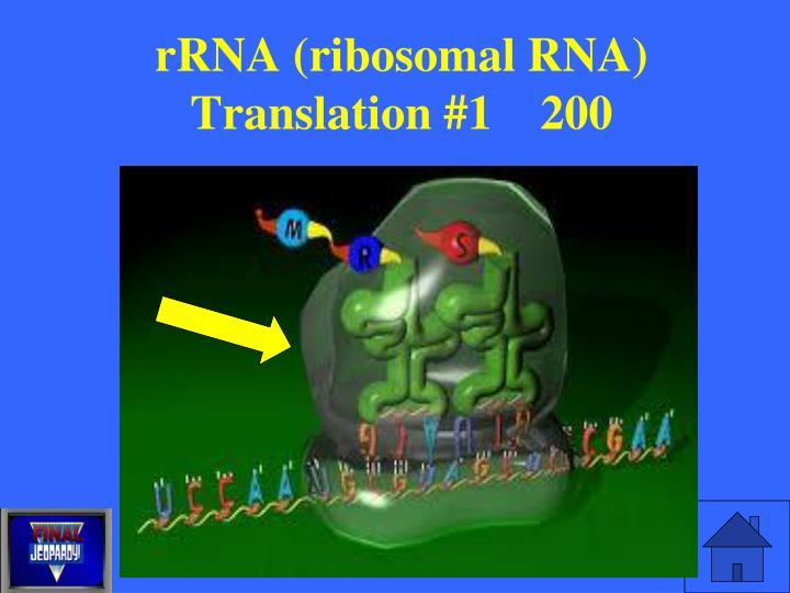 rRNA (ribosomal RNA)