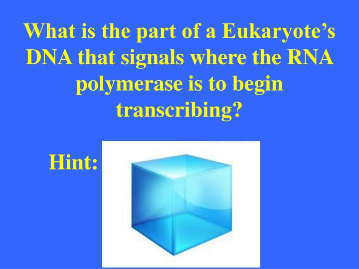 What is the part of a Eukaryote's DNA that signals where the RNA polymerase is to begin transcribing?