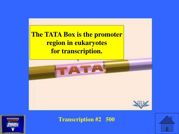 The TATA Box is the promoter