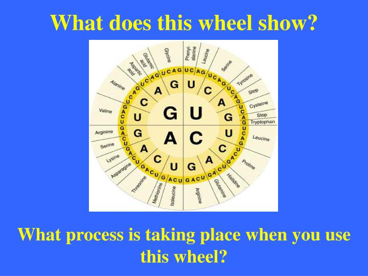 What does this wheel show?