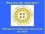 what does this wheel show