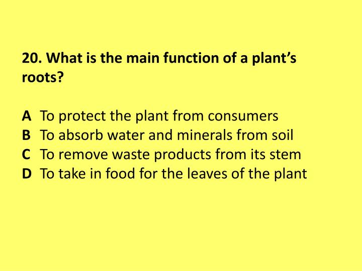 20. What is the main function of a plant's roots?