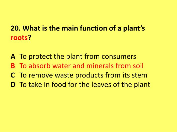 20. What is the main function of a plant's
