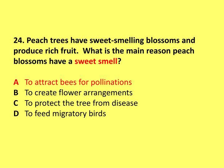 24. Peach