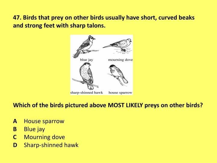 47. Birds