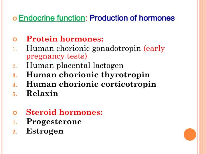 Endocrine function
