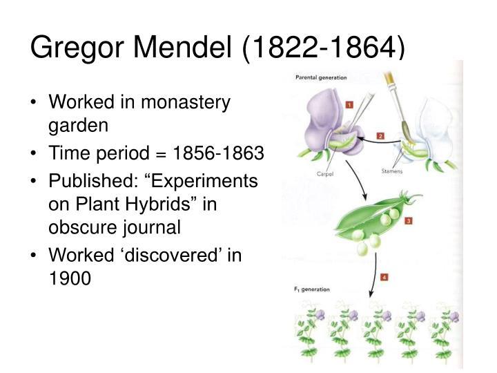 Gregor Mendel (1822-1864)