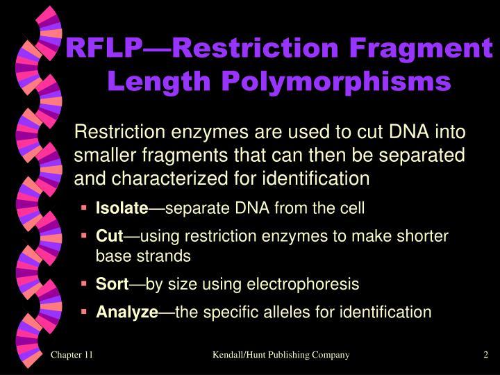 RFLP—Restriction Fragment Length Polymorphisms