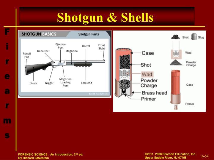 Shotgun & Shells