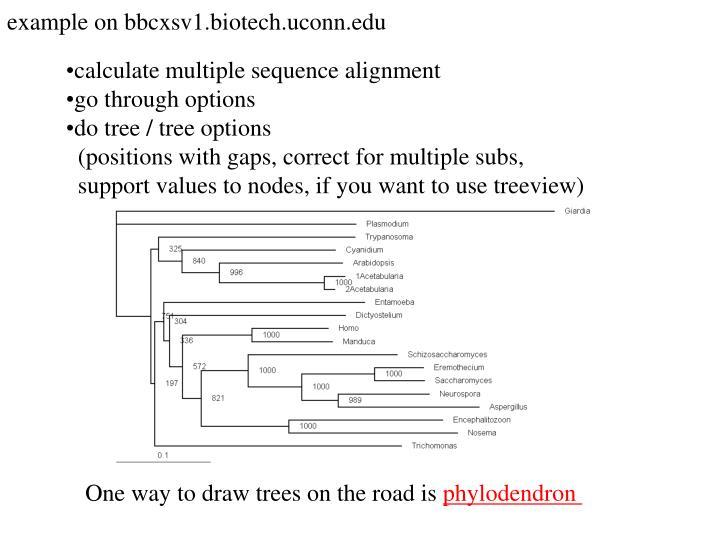 example on bbcxsv1.biotech.uconn.edu