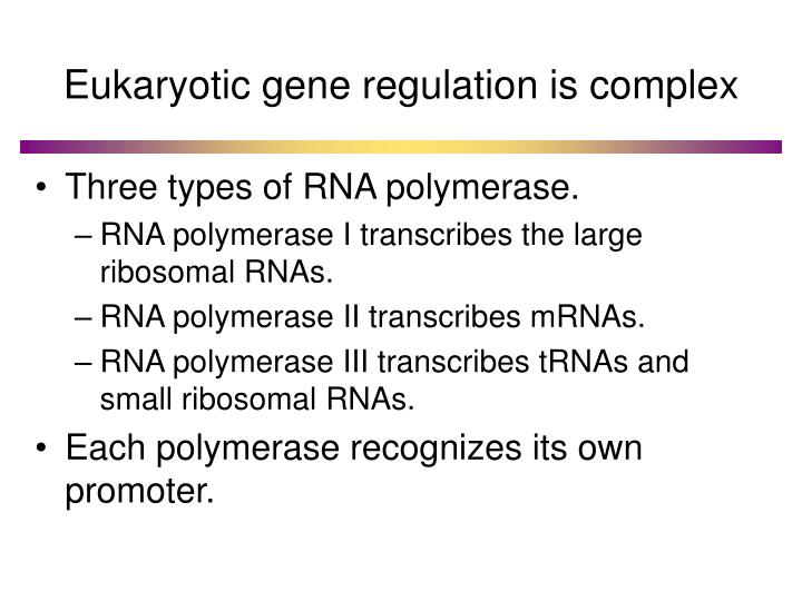 Eukaryotic gene regulation is complex