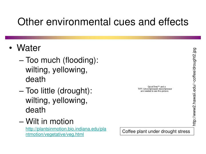 Other environmental cues and effects