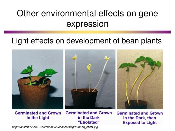 Other environmental effects on gene expression