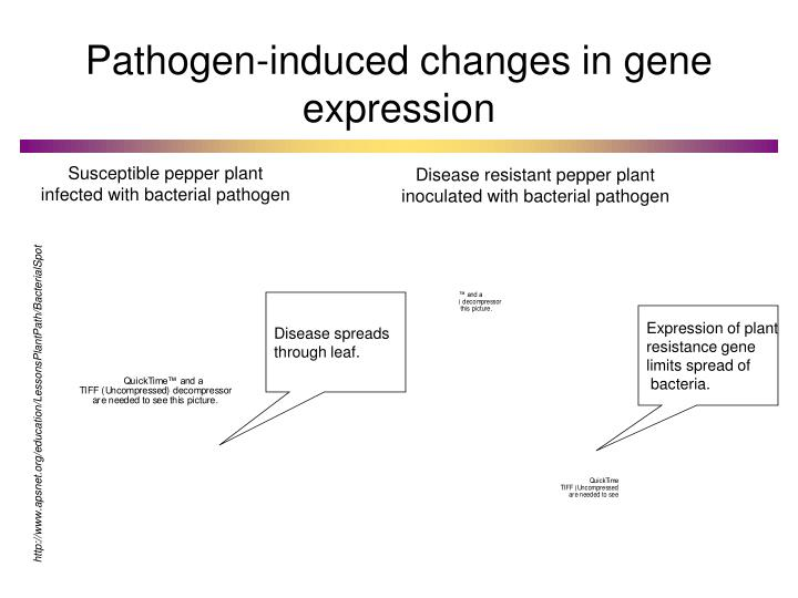 Pathogen-induced changes in gene expression