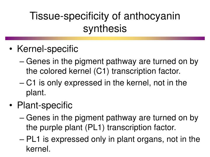 Tissue-specificity of anthocyanin synthesis
